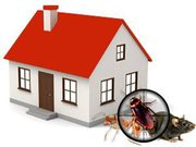 Building and Pest Inspection in Craigieburn